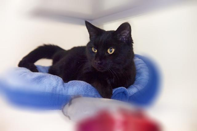 My name is Loretta and I am ready for adoption. Learn more about me!