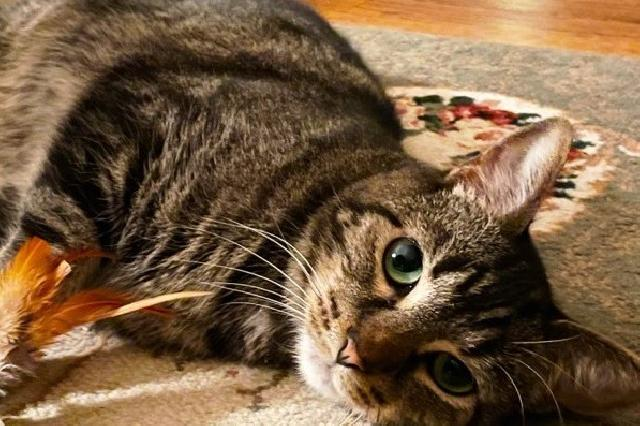 My name is Elle and I am ready for adoption. Learn more about me!