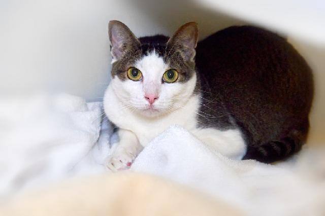 My name at SAFE Haven was Dunkin and I was adopted!