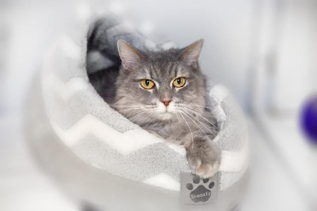 My name at SAFE Haven was Pippa and I was adopted!