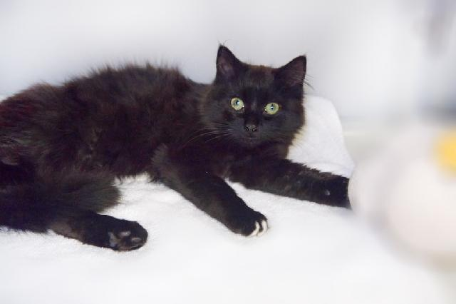 My name at SAFE Haven was York and I was adopted!