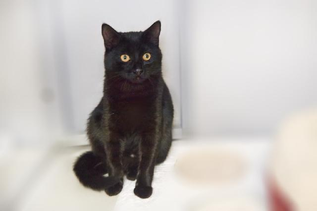 My name at SAFE Haven was Enzo and I was adopted!