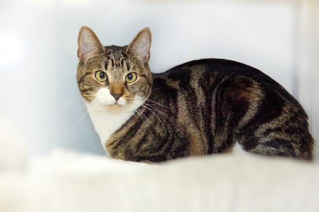 My name at SAFE Haven was Mokona and I was adopted!
