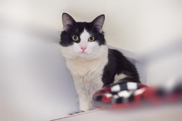 My name at SAFE Haven was Naruto and I was adopted!