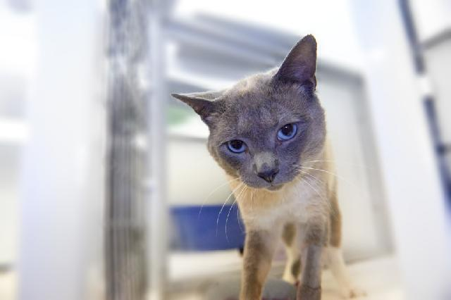 My name at SAFE Haven was Rubens and I was adopted!