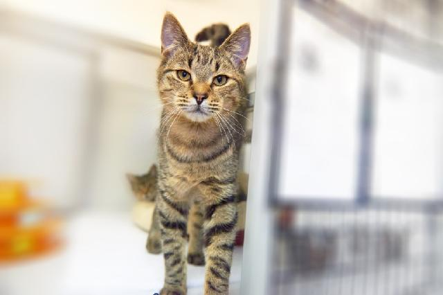 My name at SAFE Haven was Hummus and I was adopted!