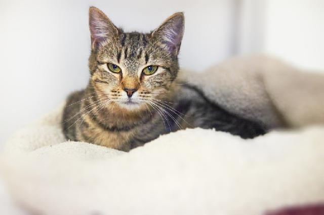 My name at SAFE Haven was Tabouli and I was adopted!