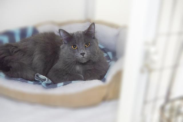 My name at SAFE Haven was Shamrock and I was adopted!