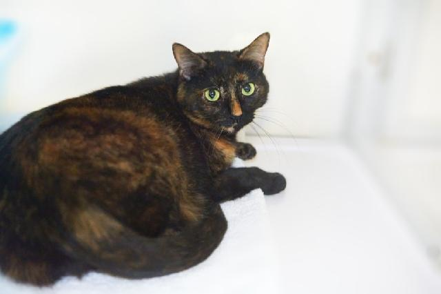 My name at SAFE Haven was Ireland and I was adopted!