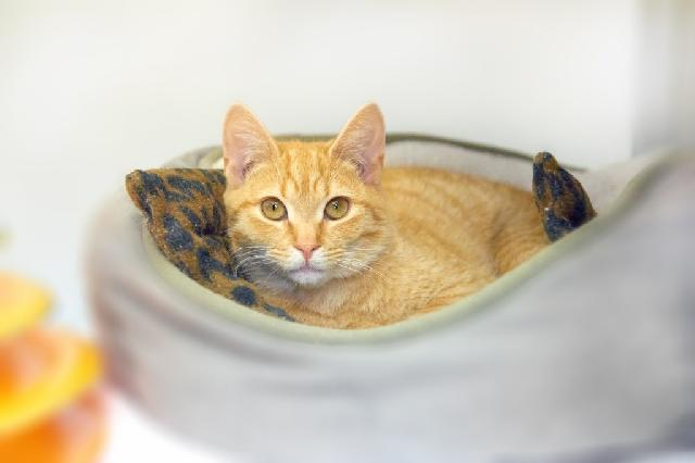 My name at SAFE Haven was Nami and I was adopted!
