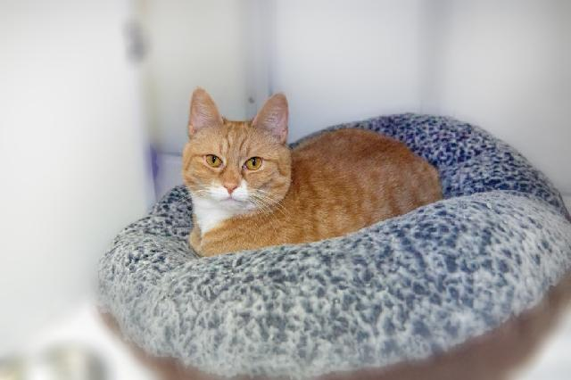 My name at SAFE Haven was Gio and I was adopted!