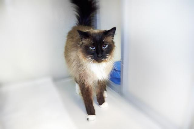 My name at SAFE Haven was Gia and I was adopted!