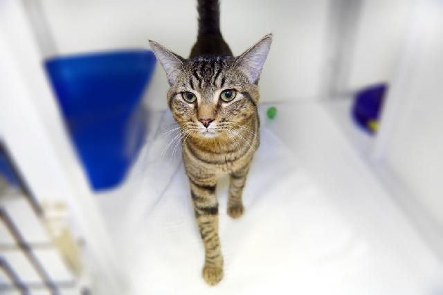 My name at SAFE Haven was Carberry and I was adopted!