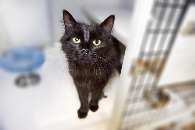 My name at SAFE Haven was Sadey and I was adopted!