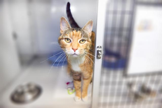 My name at SAFE Haven was Hera and I was adopted!