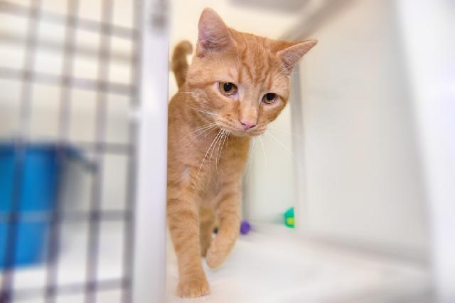 My name at SAFE Haven was Nabs and I was adopted!