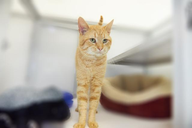 My name at SAFE Haven was Wuzzle and I was adopted!
