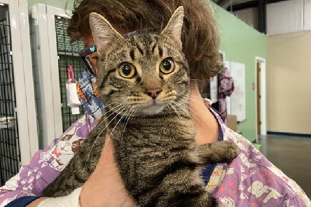 My name at SAFE Haven was Starkist and I was adopted!