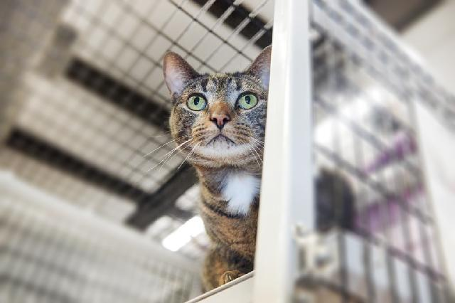 My name is Riviera and I am ready for adoption. Learn more about me!