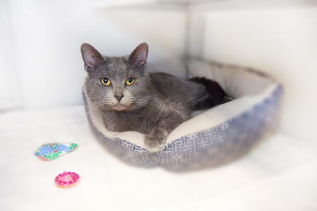 My name at SAFE Haven was Greybeard and I was adopted!