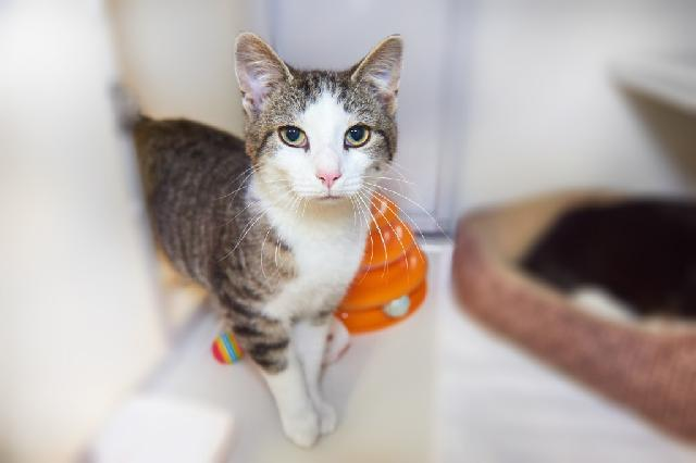 My name at SAFE Haven was Anders and I was adopted!