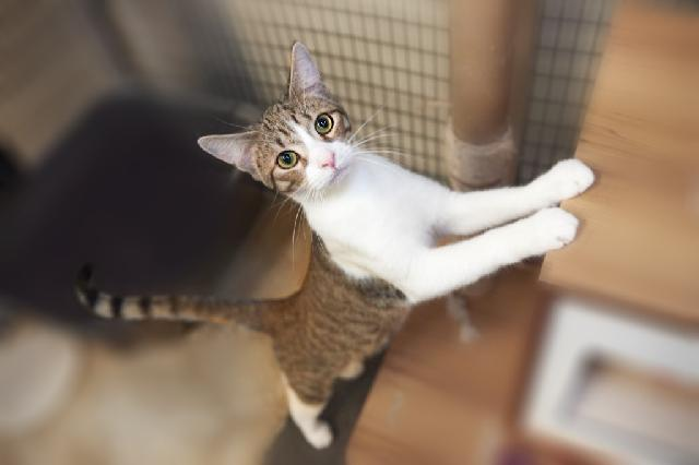 My name is Mikkel and I am ready for adoption. Learn more about me!