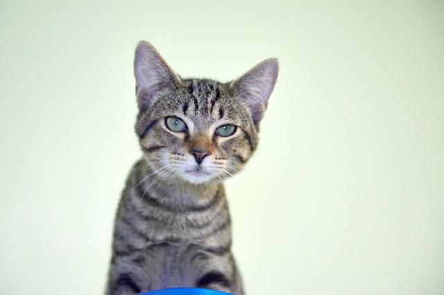 My name is Lasse and I am ready for adoption. Learn more about me!