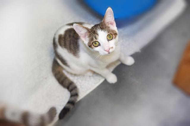 My name is Tove and I am ready for adoption. Learn more about me!
