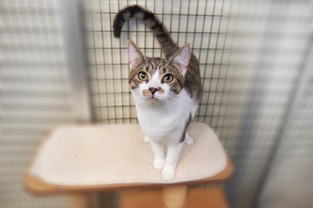 My name is Merethe and I am ready for adoption. Learn more about me!