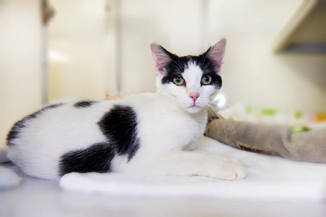 My name at SAFE Haven was Alaina and I was adopted!