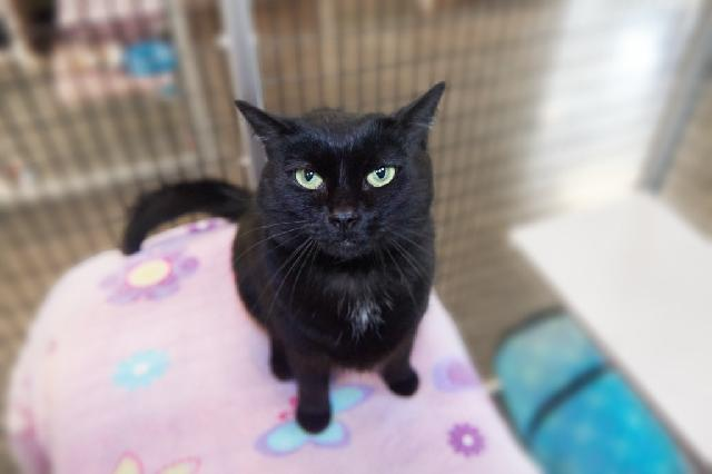 My name is Antonia and I am ready for adoption. Learn more about me!