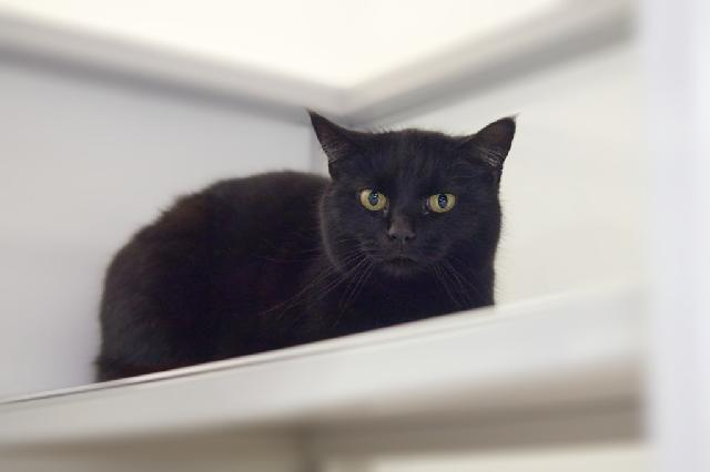 My name is Neussi and I am ready for adoption. Learn more about me!