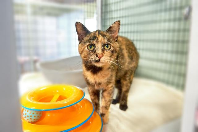 My name is Shade and I am ready for adoption. Learn more about me!