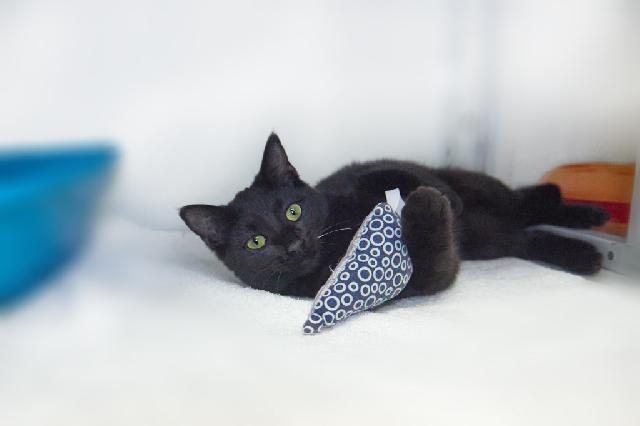 My name at SAFE Haven was Cornell and I was adopted!
