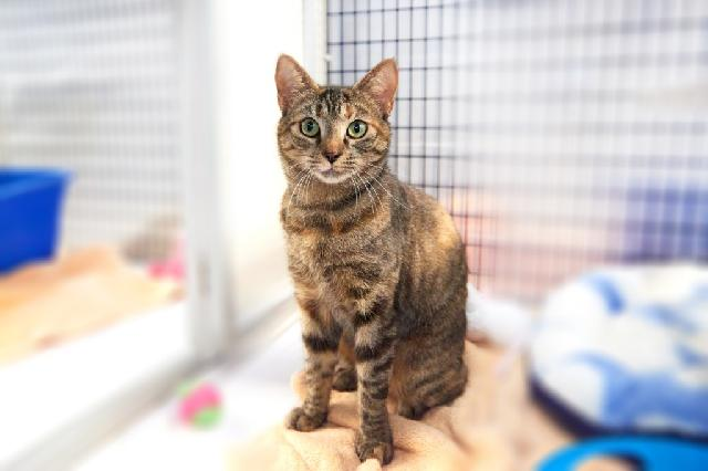 My name is Tati and I am ready for adoption. Learn more about me!