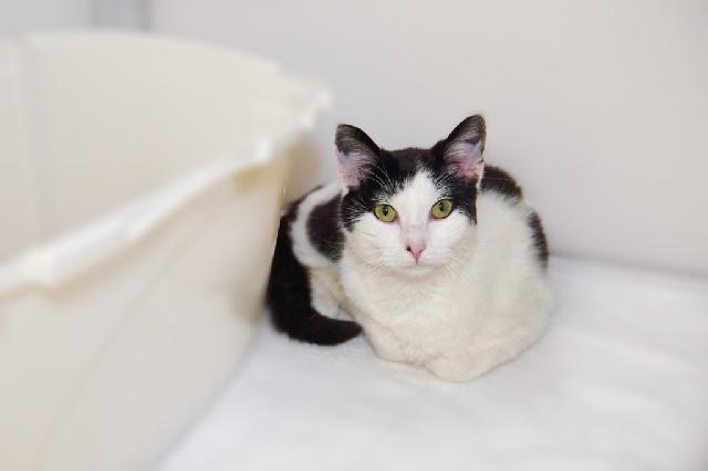 My name at SAFE Haven was Lilah and I was adopted!