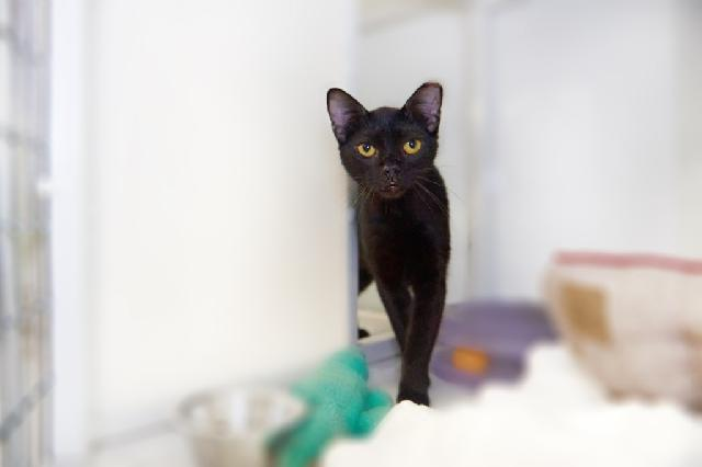 My name is Barista and I am ready for adoption. Learn more about me!