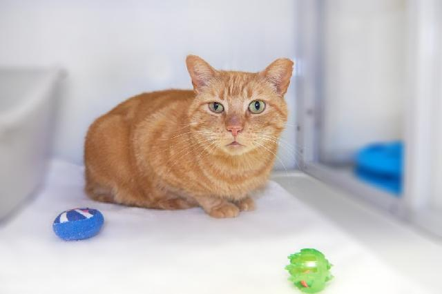 My name is Athos and I am ready for adoption. Learn more about me!