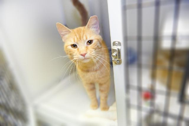 My name at SAFE Haven was Blanche and I was adopted!