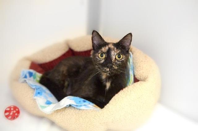 My name is Viva and I am ready for adoption. Learn more about me!