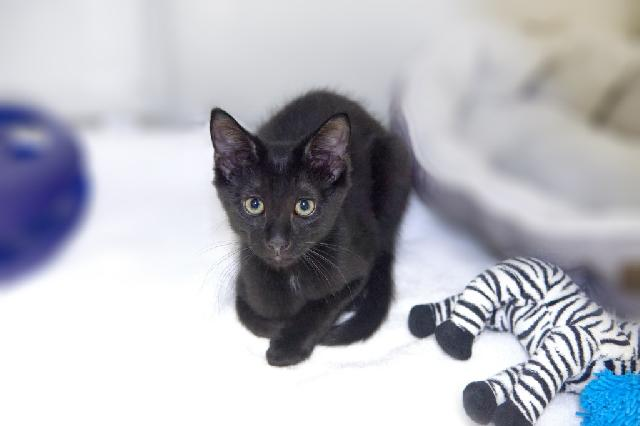 My name at SAFE Haven was Stroganoff and I was adopted!