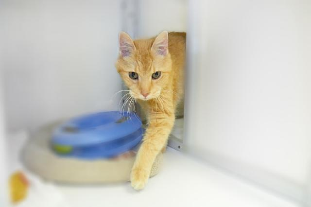 My name at SAFE Haven was Eugene and I was adopted!