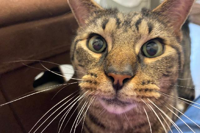 My name is Mish Mish and I am ready for adoption. Learn more about me!