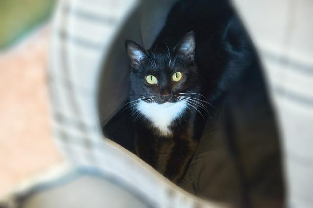 My name is Brisa and I am ready for adoption. Learn more about me!