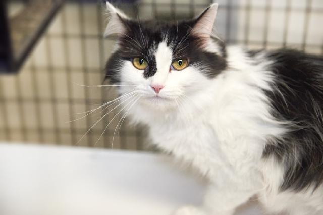 My name is Blythe and I am ready for adoption. Learn more about me!
