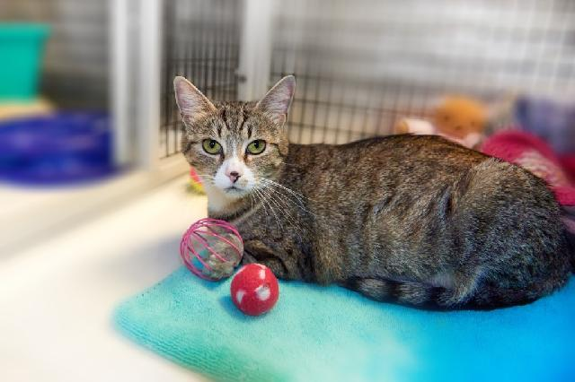 My name is Marisol and I am ready for adoption. Learn more about me!
