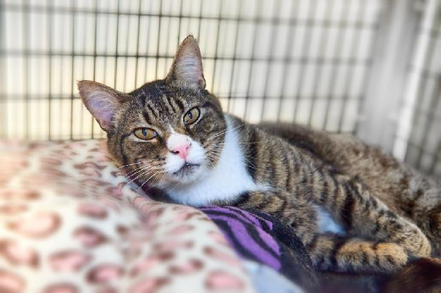 My name is Grand Pooba and I am ready for adoption. Learn more about me!