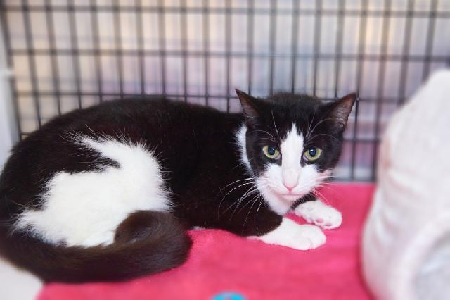 My name is Jane and I am ready for adoption. Learn more about me!