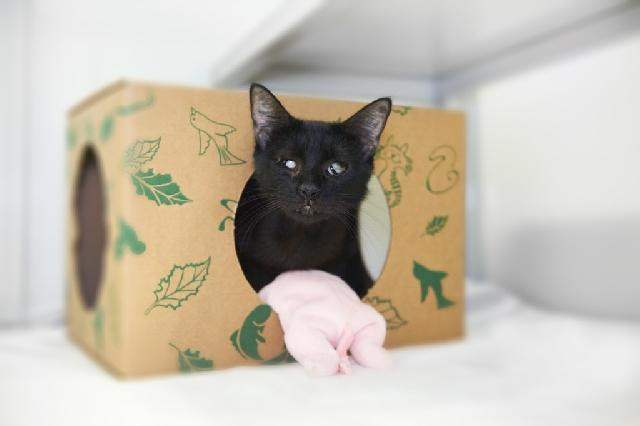 My name at SAFE Haven was Krumpet and I was adopted!