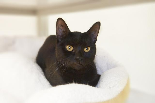 My name is Jobe and I am ready for adoption. Learn more about me!